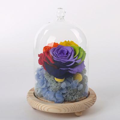 永生花:玻璃罩彩虹花 蓝绣球