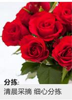 老师网上订花